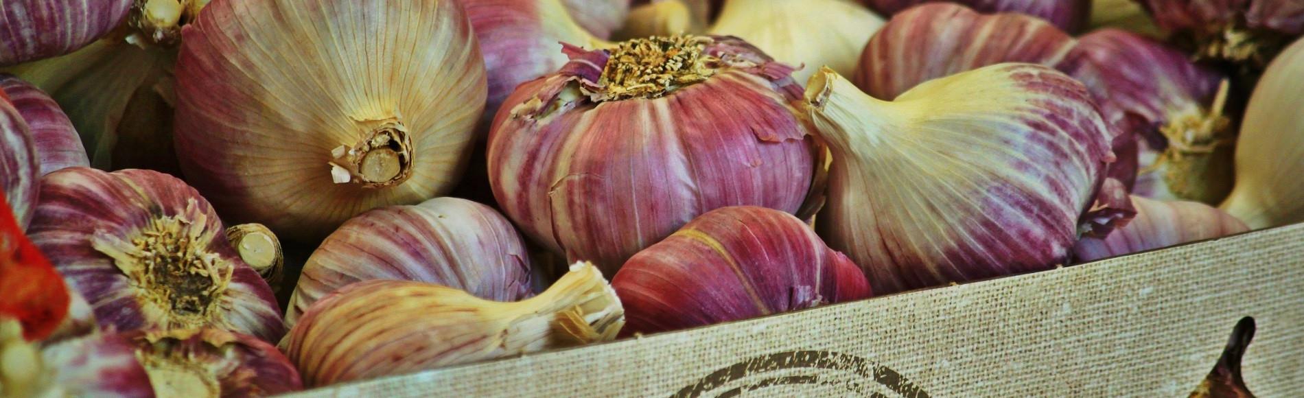 garlic-868878